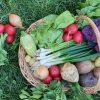cos cu legume si verdeturi de primavara
