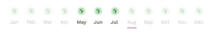 sezon sparanghel