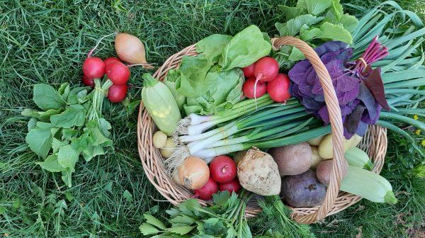 legume pe bune culese proaspat din gradina