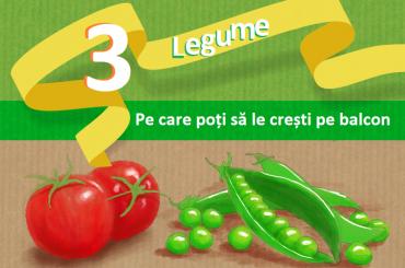 baner 3 legume usor de crescut in ghiveci