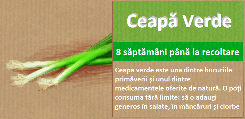 banner ceapă verde