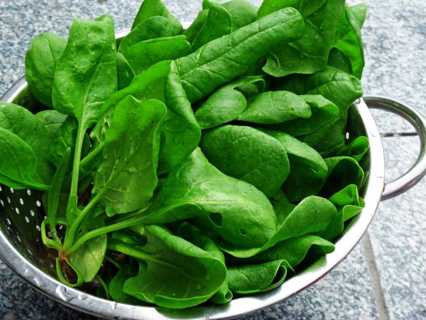 leguma-leguma verde plina de fier