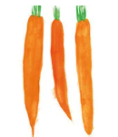 morcovi-icon-