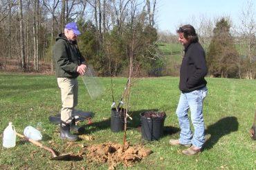 plantat copacii