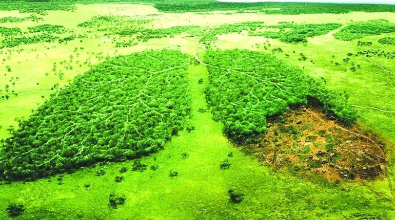 sol ecologic agricultura bio